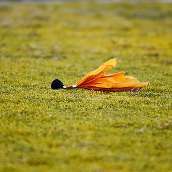 Oct 2, 2010; Baton Rouge, LA, USA; A penalty flag for too many men on the field negates a play that would have given the Tennessee Volunteers a win over the LSU Tigers at Tiger Stadium. LSU defeated Tennessee 16-14.  Mandatory Credit: Derick E. Hingle