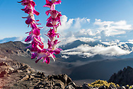 A flower lei left as an offering at the crater rim of Haleakala National Park, Maui, Hawaii.