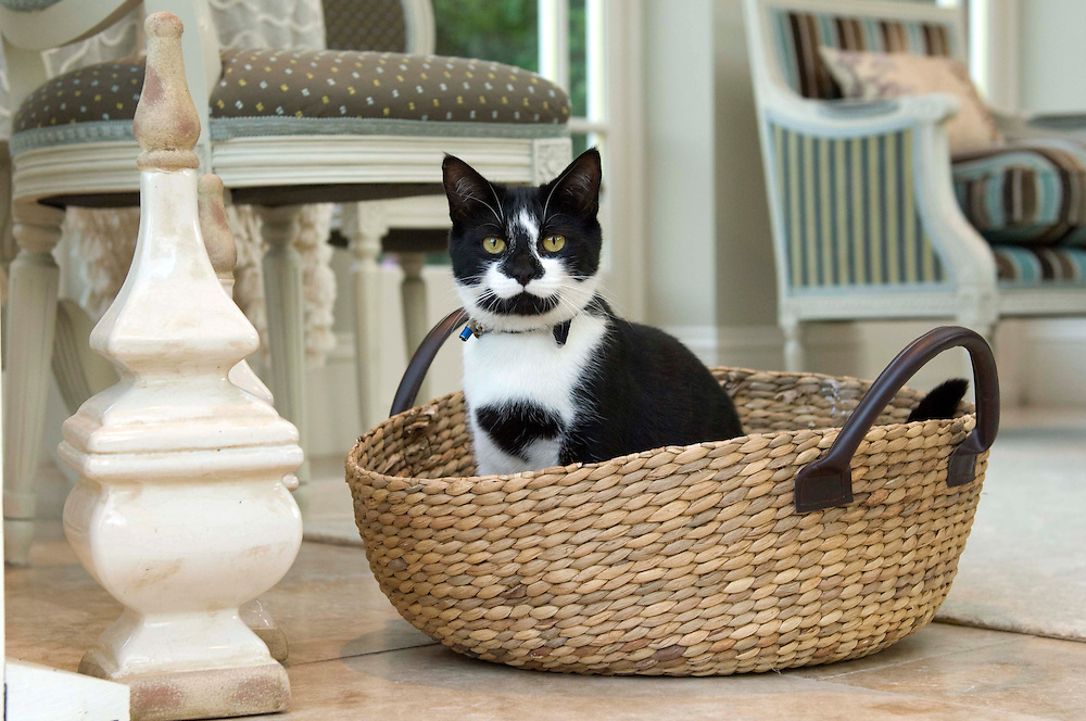 Black and White cat in a basket.
