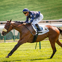 Longchamp 09/09/2018