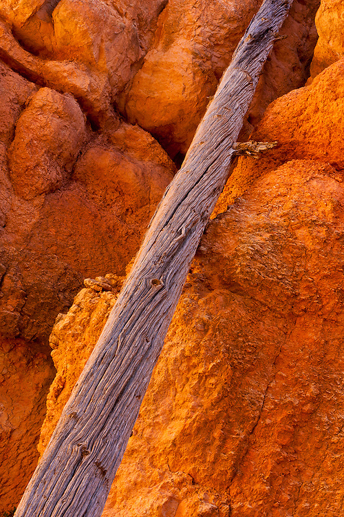 A fallen log sits against the orange sandstone walls of Bryce Canyon National Park, Utah