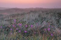 Vangså Dune Heath - National Park Thy, Denmark