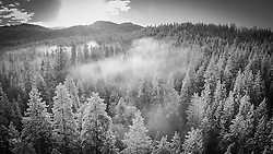 Yosemite on a foggy Spring morning