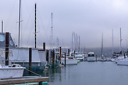 Foggy Sausalito Harbor in San Francisco