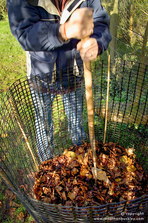 Making leaf mould - tamping down the leaves