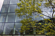 Healthy green leaves sprout from a tree below an office building, a scene of economic prosperity, growth and recovery.
