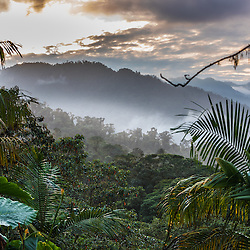 The sun rises above the Santa Lucia Cloud Forest, Ecuador.