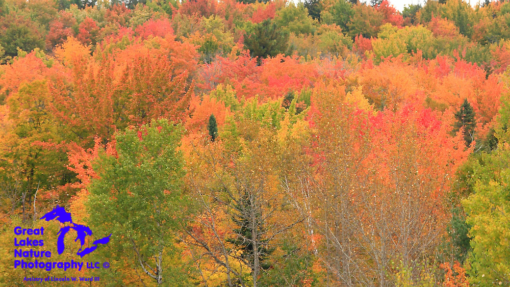 Powerful fall color at Munising Michigan.