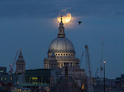London, January 01 2018. The super moon - or 'wolf moon' at 99.7% full rises behind St Paul's Cathedral and the City's skyline, photographed from the Hungerford Bridge in London. © Paul Davey