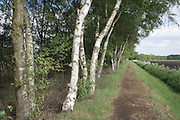 edge of woods and agricultural land in Holland