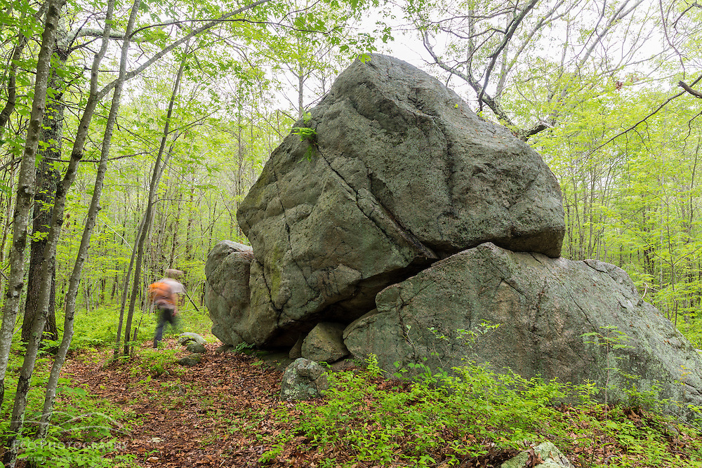 A man walks past a glacial erratic in the woods at a Wildlands Trust preserve in Brockton, Massachusetts.