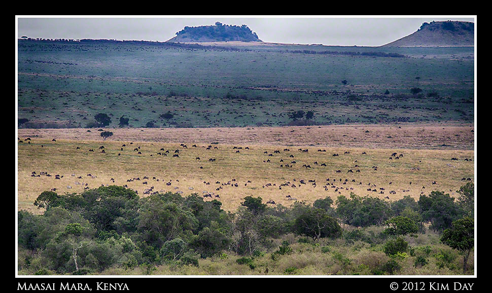 Wildebeest Far As The Eye Can See.Maasai Mara, Kenya.September 2012