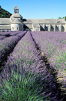 France - Provence - Vaucluse - Abbaye Desenanque