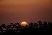 Nova Scotia, Canada..Cape Sable Island, Clark's Harbor. Lobster traps in silhouette on the dock with setting sun.