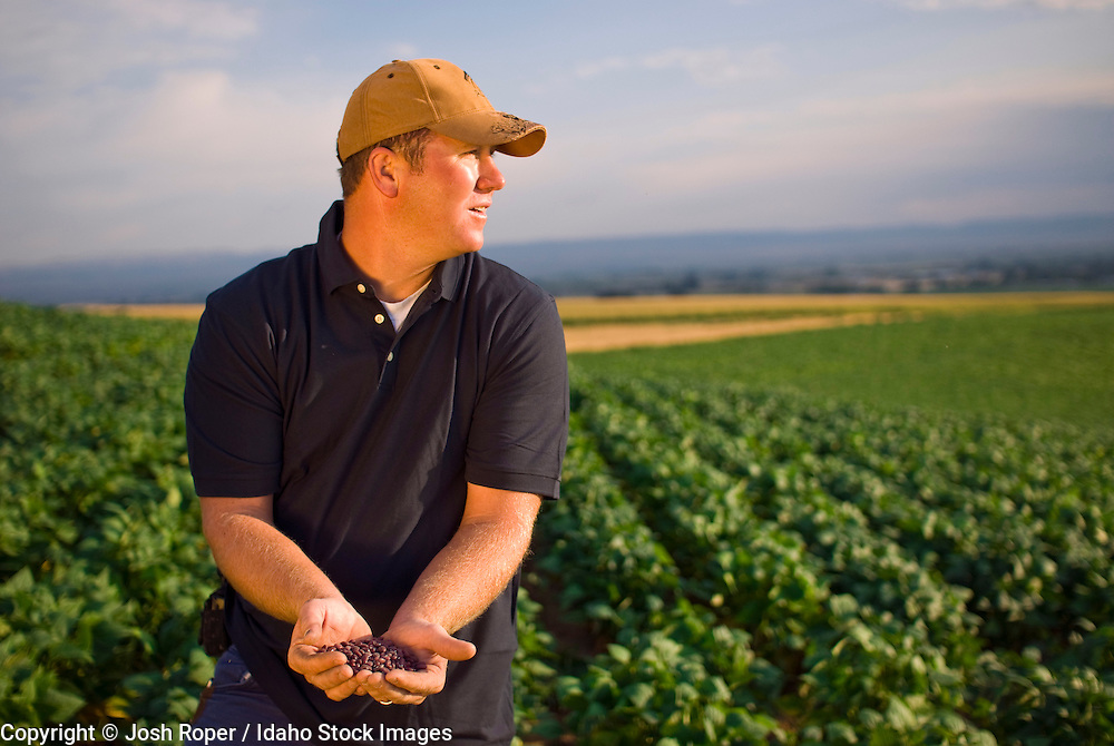 Idaho, A Farmer in his field of soybeans.