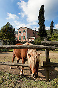old farm,<br /> horse in the paddock