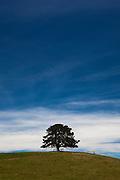 Lone tree on hilltop, Victoria, Australia