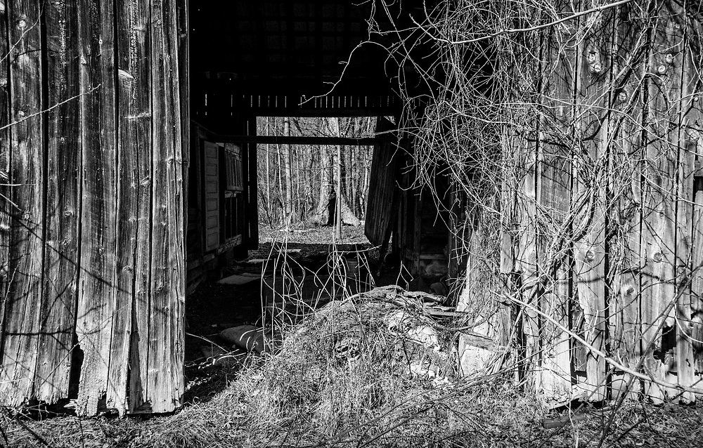 Looking through the side of this old barn to an tree on the other side presents a sense of depth. The image was processed to emulate Agfa APX 100 black & white film.