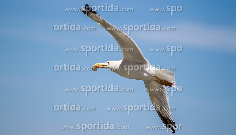 THEMENBILD - URLAUB IN KROATIEN, eine Möwe im Flug aufgenommen am 03.07.2014 in Rovinj, Kroatien // a seagull in Rovinj, Croatia on 2014/07/03. EXPA Pictures © 2014, PhotoCredit: EXPA/ JFK