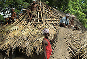 Re-doing the roof of a house using palmyrah and coconut palm leaves. Chenthamangalam, Villupuram District, Tamil Nadu.