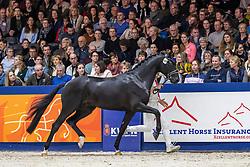 550, Maclaren DE<br /> KWPN hengstenkeuring - 's Hertogenbosch 2020<br /> © Hippo Foto - Dirk Caremans<br /> 31/01/2020