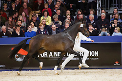 629 - Gotcha Utopia<br /> KWPN Stallion Selection - 's Hertogenbosch 2014<br /> © Dirk Caremans