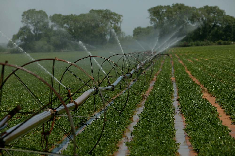 Lateral Move Side Roll Wheel Line Irrigation On Peanuts