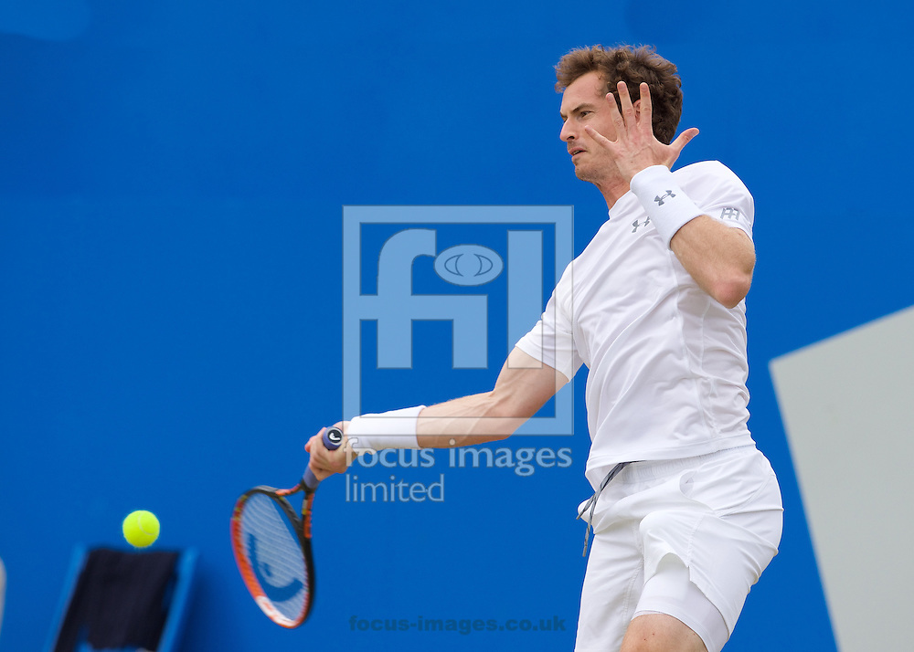 Andy Murray of Great Britain plays a forehand during his semi-final final match against Viktor Troicki of Serbia in Aegon Championships at the Queen's Club, West Kensington<br /> Picture by Alan Stanford/Focus Images Ltd +44 7915 056117<br /> 20/06/2015