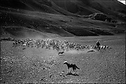 The Goat People: In late November, at the beginning of summer cattle, are moved from the valleys up to 3.000 meters to the Andes Mountains where cheese production is the main product. the annual migration of the flocks from summer pastures in the central Chilean Andes.