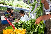 Des réfugiés du Bhoutan et de Birmanie vendent leur production sur le Farmers Market d'Albany Park, Chicago. Sont présents sur les étales Grozel, Melon amer, etc, des légumes inconnus des nord américains. Etre en capacité de partager leur culture avec leur communauté d'accueil est un véritable objet de fierté. Après avoir vécu en camp de réfugiés et avoir reçu pendant si longtemps, ils sont désormais capable de donner en retour. // The refugees of Bhutan and Birma sell there produce on the Farmer's Market in Albany Park, Chicago.  They present Grozel, bitter melon, etc. vegetables new to North Americans.  To be in capacity to share their culture with their host community is a real object of pride for them.  After having lived in a refugee camp and having received for so long, they are now capable to give back.