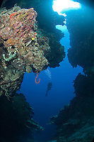 Diver in Reef Cavern.