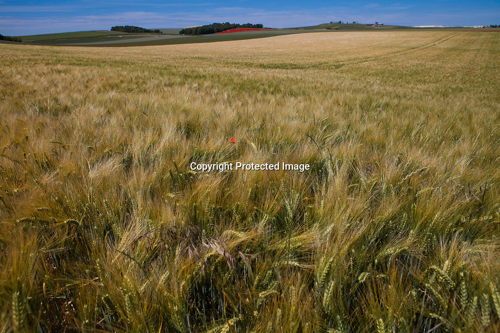 grain production in France