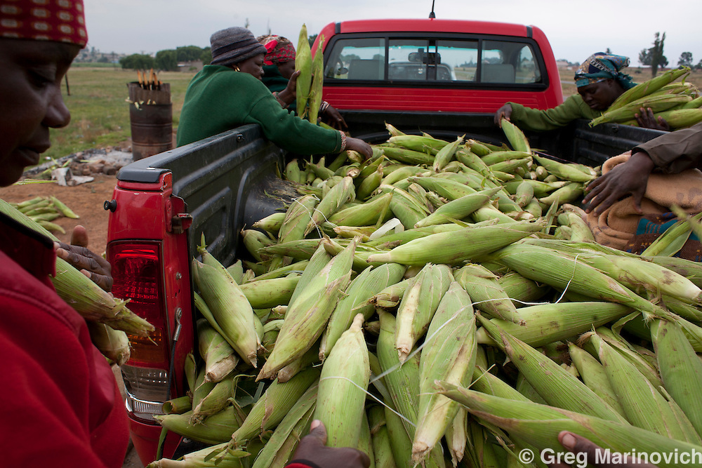 South Africa, Orange Farm, Drieziek, November 22, 2011. South Africans eating popular foods. Street vendors buy fresh corn or mielies for roasting at the roadside. One corn ear costs R5 and sells for R8 cooked. Lenasia South. Photo Greg Marinovich / Storytaxi.com