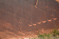 Below the Glen Canyon dam in what is left of Glen Canyon resides this petroglyph panel (Mountain sheep)
