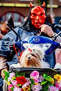 HALLOWEEN DOG PARADE 2020 ROTTERDAM