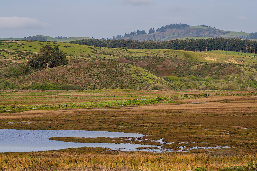 Pescadero Marsh Natural Preserve, Pescadero, San Mateo County Coast, Caliifornia