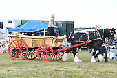 Class 17 - Single Heavey Horse Turnout