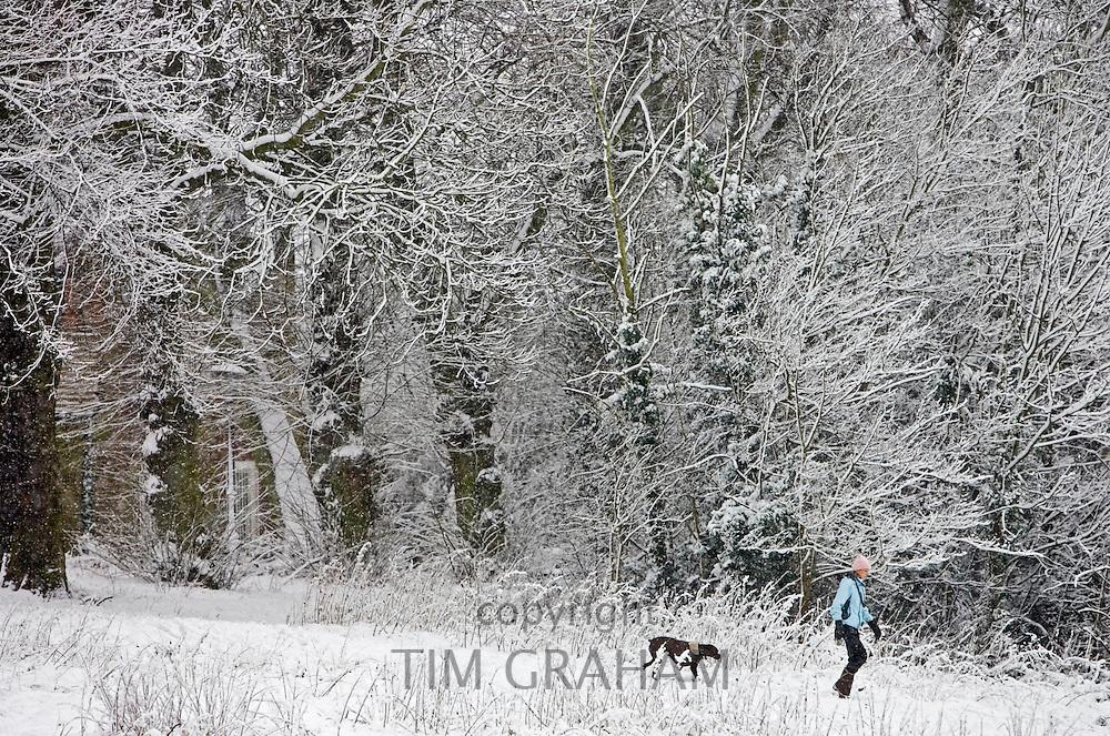 Woman walks the dog on winter's day across snow-covered Hampstead Heath, North London, United Kingdom