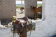 Horses are a staple mode of transportation in Boquillas del Carmen. Most families own a few horses or donkeys to rent to tourists to ride into town from the border crossing or take tours in the mountains.