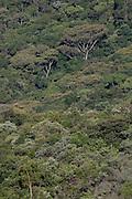 Nova Lima_MG, Brasil...Estacao Ecologica dos Fechos em Nova Lima, Minas Gerais. ..The Fechos Ecological Station in Nova Lima, Minas Gerais. ..Foto: JOAO MARCOS ROSA / NITRO