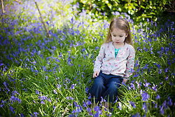 @Licensed to London News Pictures 21/04/2016. Sophie Essenhigh aged 3 years old enjoys the first bluebells of the season at Riverhill Himalayan Gardens in Sevenoaks, Kent. Photo credit: Manu Palomeque/LNP