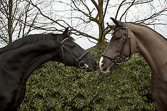 Valegro and his father Negro - 2017
