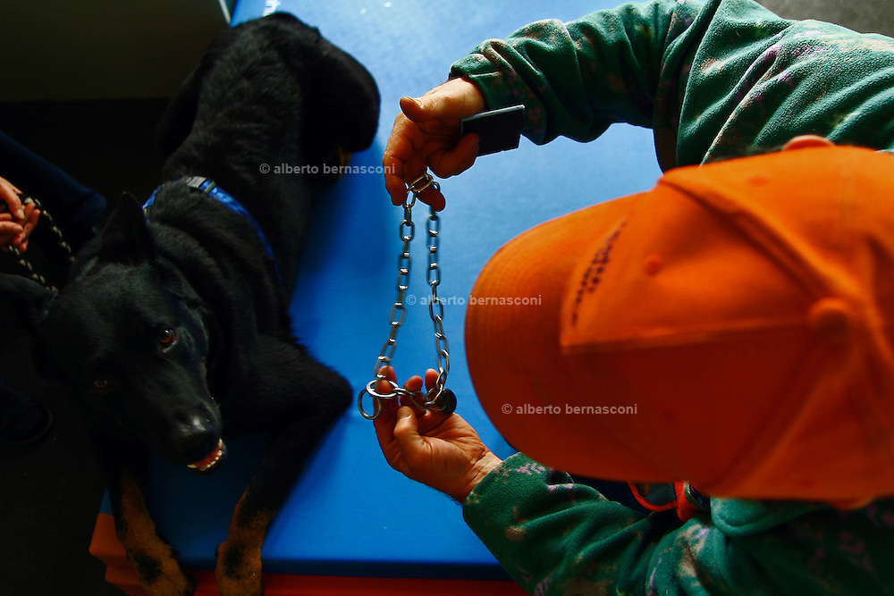 Switzerland, Uzwil, Health Balance clinic for animals....Nando the dog, with veterinarian Andreas Roesti. The doctor removes his..collar because he claims it inhibits the dog¹s aura. Nando suffers from..excessive nervousness that prevents him from passing the test that will..allow him to work as a rescue dog... The goldfish swims lazily between the fronds of fake seaweed, under the attentive gaze of the medical staff. ?When he came here he was moving all wrong. He swam crooked, he was almost upside-down,? explains Marisa Polanec, obviously enthusiastic at the result. For it appeared that the littlest in-patient at Health Balance, the Swiss clinic for animals, had been suffering from electrosmog poisoning. ..An unusual complaint, yes, but here, in the midst of the clinic?s futuristic architecture and the green hills of San Gallo canton, the concept of normality is done away with even before arriving at a diagnosis. That?s because, to identify the cause of the goldfish?s suffering, Urs Buehler ?kinesiologist and the centre?s founder, as well as the owner of an industrial colossus in the region ?simply asked it, by using his ever-present dowsing rod. .. The goldfish swims lazily between the fronds of fake seaweed, under the attentive gaze of the medical staff. ?When he came here he was moving all wrong. He swam crooked, he was almost upside-down,? explains Marisa Polanec, obviously enthusiastic at the result. For it appeared that the littlest in-patient at Health Balance, the Swiss clinic for animals, had been suffering from electrosmog poisoning. ..An unusual complaint, yes, but here, in the midst of the clinic?s futuristic architecture and the green hills of San Gallo canton, the concept of normality is done away with even before arriving at a diagnosis. That?s because, to identify the cause of the goldfish?s suffering, Urs Buehler ?kinesiologist and the centre?s founder, as well as the owner of an industrial colossus in the region ?simply asked it, by using his ever