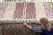 © Licensed to London News Pictures. 02/07/2012. East Molesey, UK A woman contructs a roof in a garden of garlic. The RHS Hampton Court Palace Flower Show 2012. The show runs 3-8 July, 2012. Photo credit : Stephen Simpson/LNP