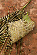 Single Palm leaf used to make basket<br />
