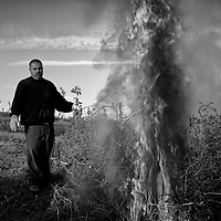 A farm worker burns tumbleweed in a field outside of Delano in Kern County in California's Central Valley, CA, Friday, Oct. 14, 2016. One of the worst droughts in California history officially ended this spring in all of the state's counties except Fresno, Kings, Tulare and Tuolumne. <br />