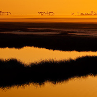 St Marks National Wildlife Refuge - St Marks, FL