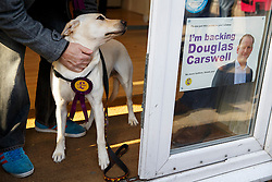 © Licensed to London News Pictures. 09/10/2014. Clacton, UK. An UKIP supporter visits UKIP campaign office in Clacton-on-Sea with his dog during the by-election on Thursday, 9 October, 2014. Photo credit : Tolga Akmen/LNP