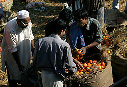 BANGLADESH DHAKA KAWRAN BAZAAR 2MARB05 - Trading scene at Kawran Bazaar vegetable market. The Bazaar has been in the Tejgaon area for at least 30 years and is one of the largest markets in Dhaka city...jre/Photo by Jiri Rezac..© Jiri Rezac 2005..Contact: +44 (0) 7050 110 417.Mobile:  +44 (0) 7801 337 683.Office:  +44 (0) 20 8968 9635..Email:   jiri@jirirezac.com.Web:    www.jirirezac.com..© All images Jiri Rezac 2005- All rights reserved.