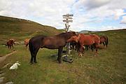 Dyrhaug ridesenter, Ramsjøhytta.  Foto: Bente Haarstad Flere firma satser på hesteturisme fjellet i Tydal, og i bygda Stugudal er det flere islandshester enn fastboende. There are many possibilities for riding in the mountains in Tydal in Mid-Norway. Dyrhaug Ridesenter,